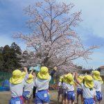 桜きれ~い!!